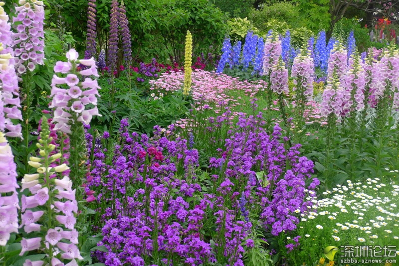 美丽 随笔 那些花儿 西山/如同塔莎奶奶的美丽花园...