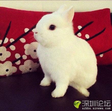 我去,短腿短耳,这还是兔子吗 萌翻了图片