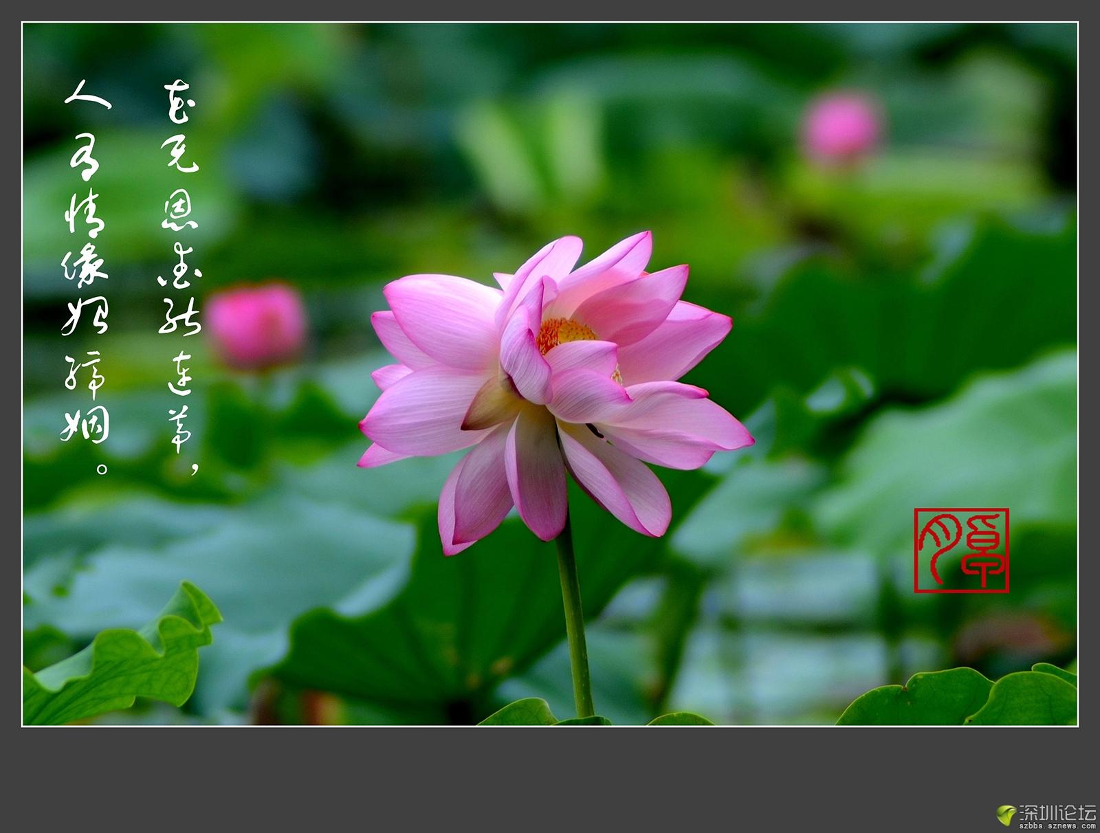 照片 012-2_副本.jpg