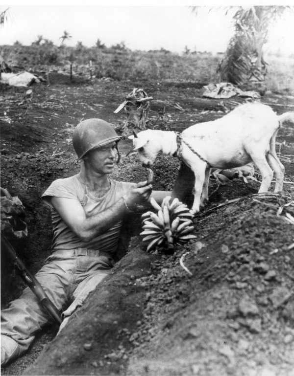 二战期间,一名士兵把手上的香蕉分给了山羊。