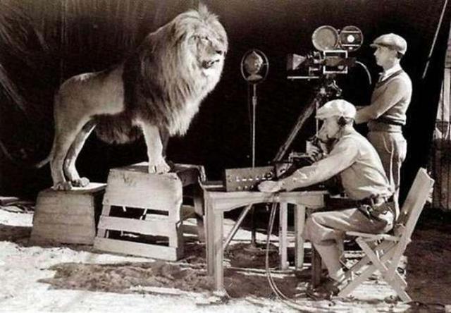 拍摄米高梅电影开头那头吼叫的狮子。