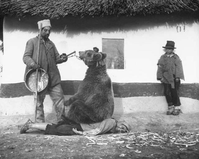 1946年,罗马尼亚人用熊来治疗腰部的疼痛。