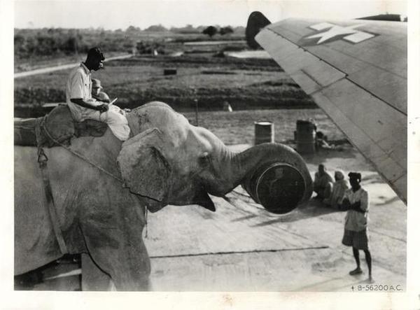 用大象将物资装载到飞机上,1945年