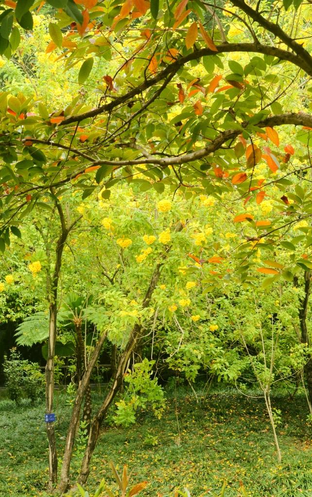 秋天园博园10.jpg