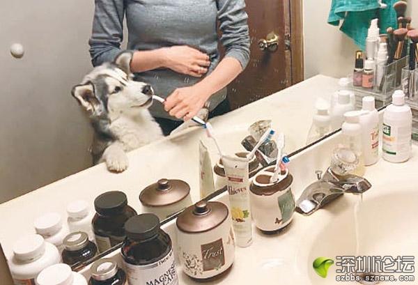雷亞享受主人為牠刷牙。(互聯網圖片)
