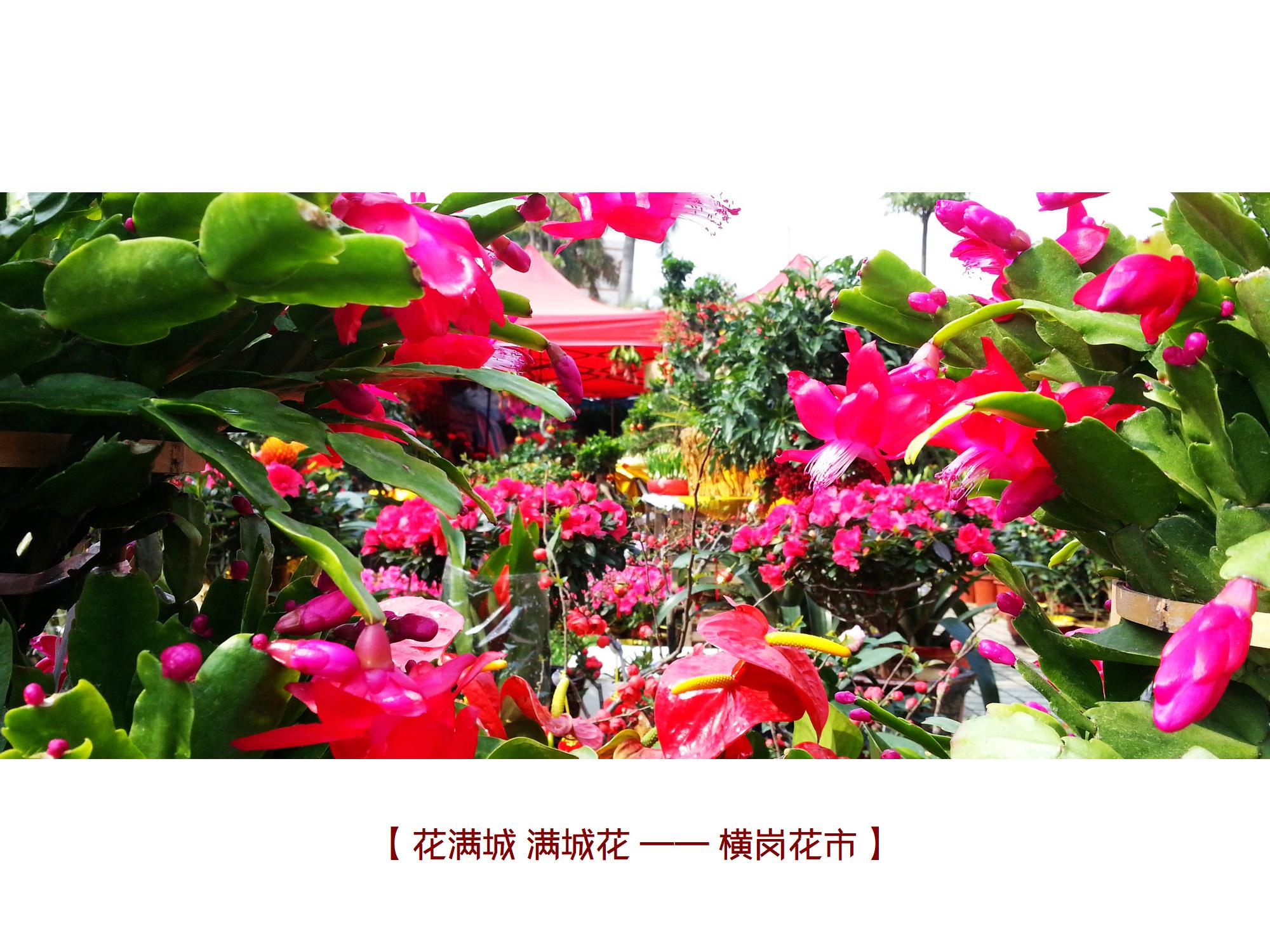 20140128_105108 横岗花市.jpg