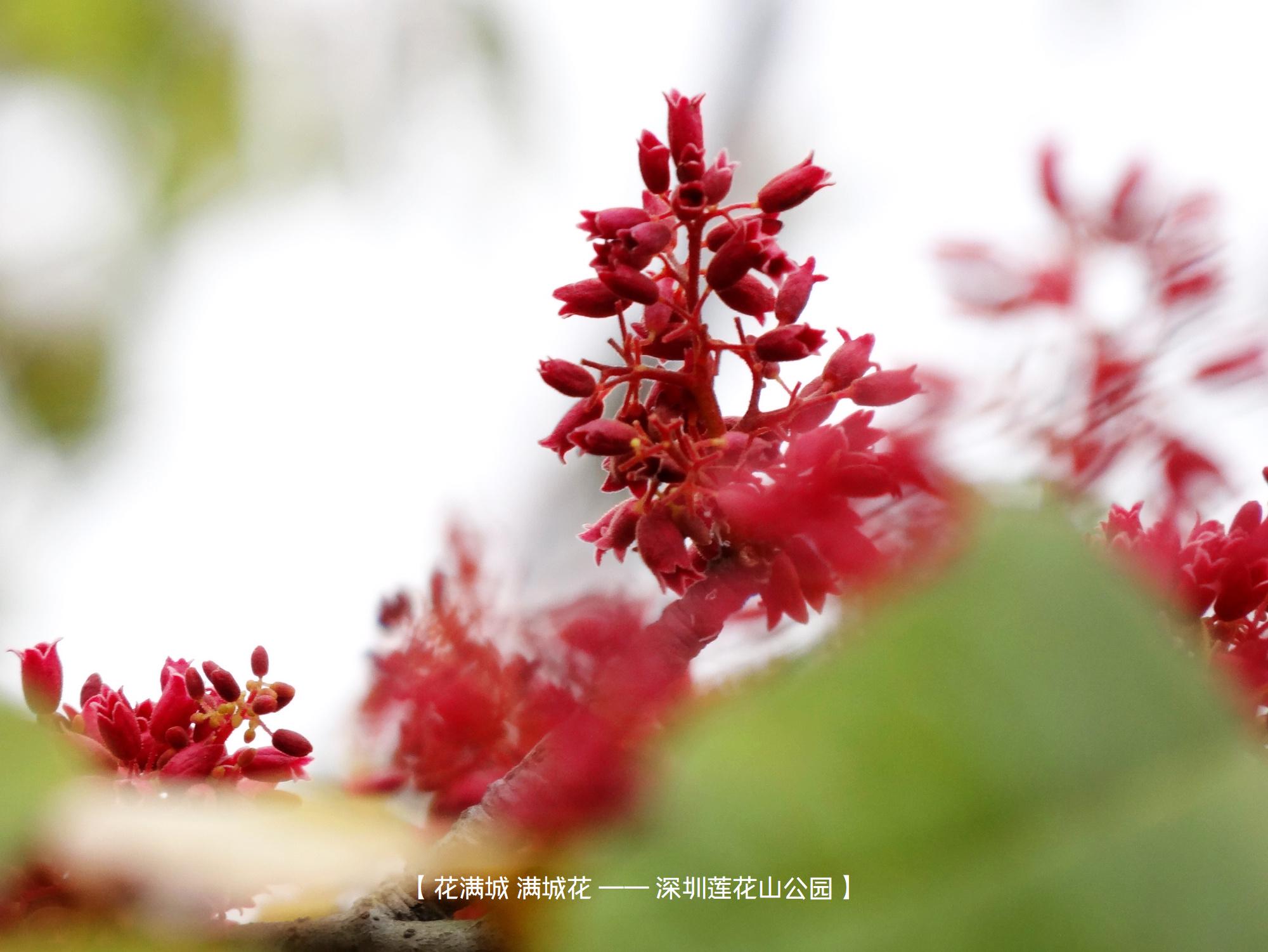 DSC00693 莲花山.jpg