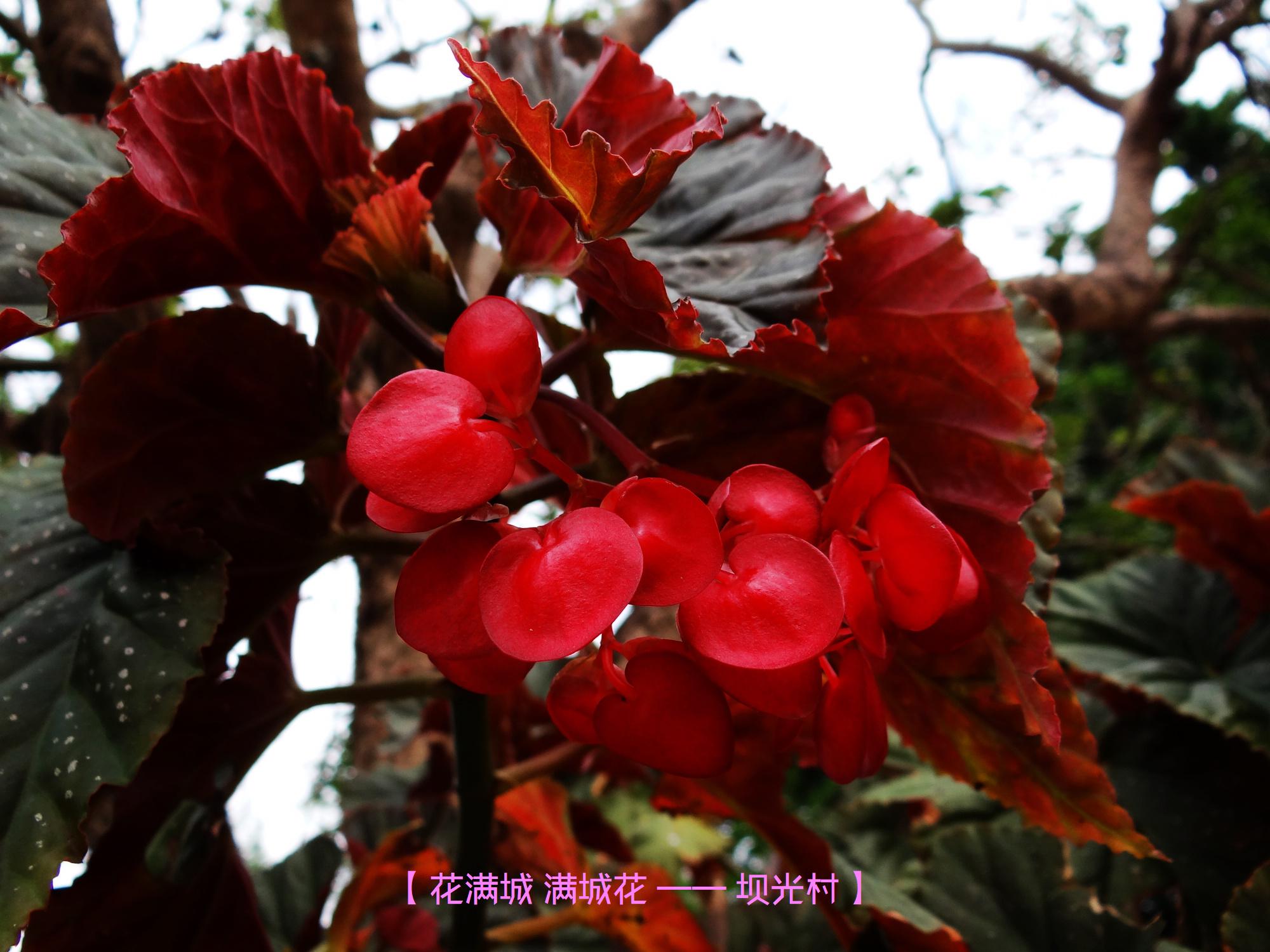 DSC00873 坝光村.jpg