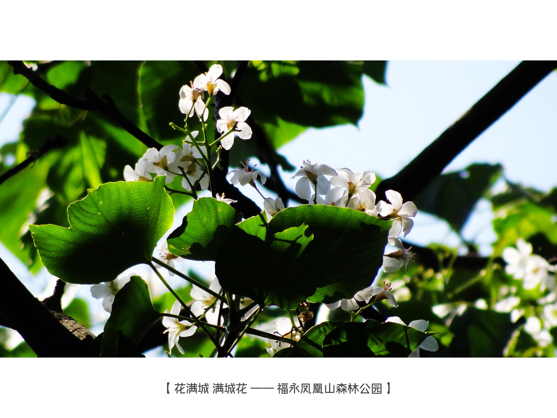 DSC04023f 凤凰山.jpg
