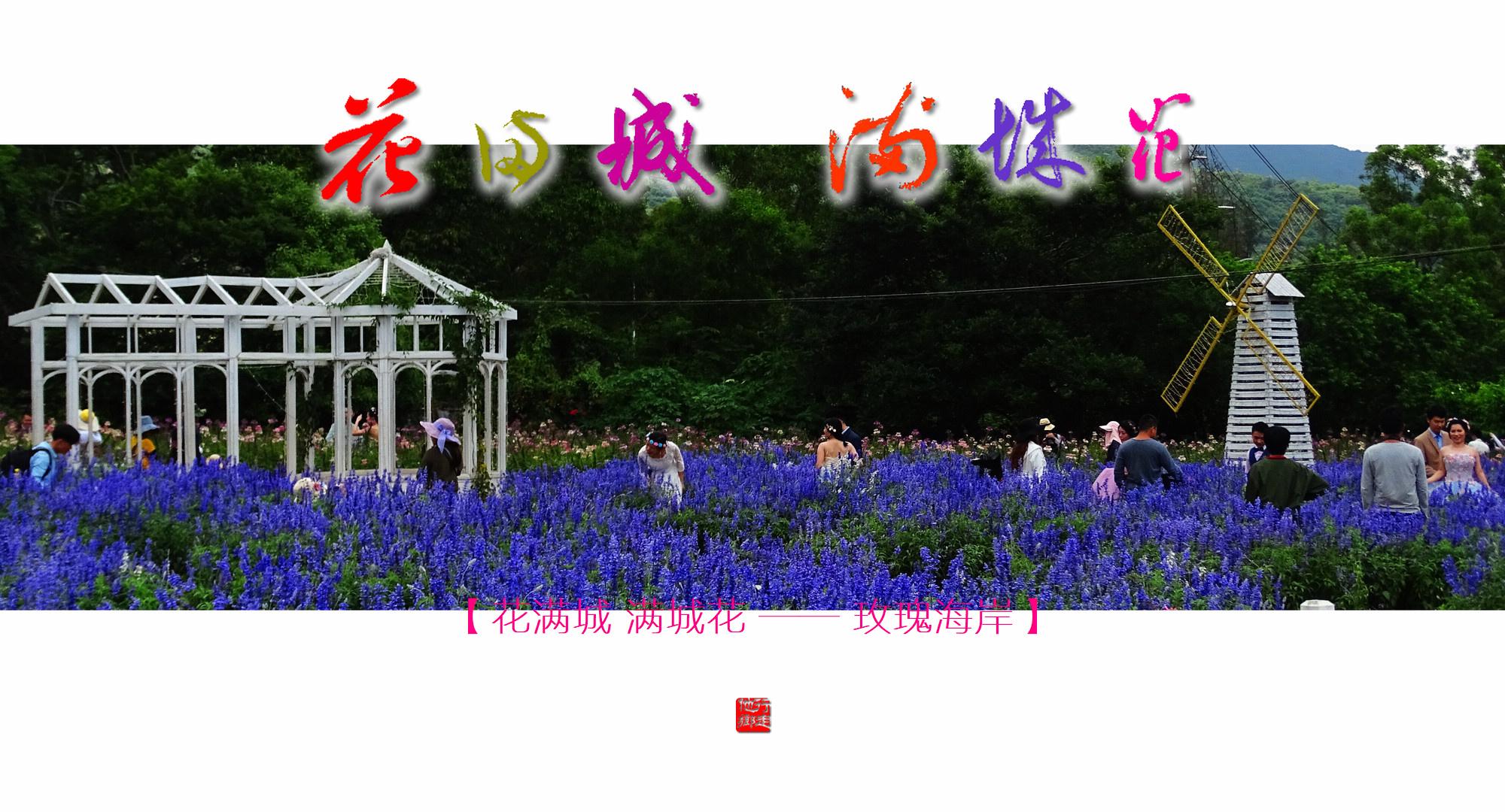 DSC04075 Y 玫瑰.jpg