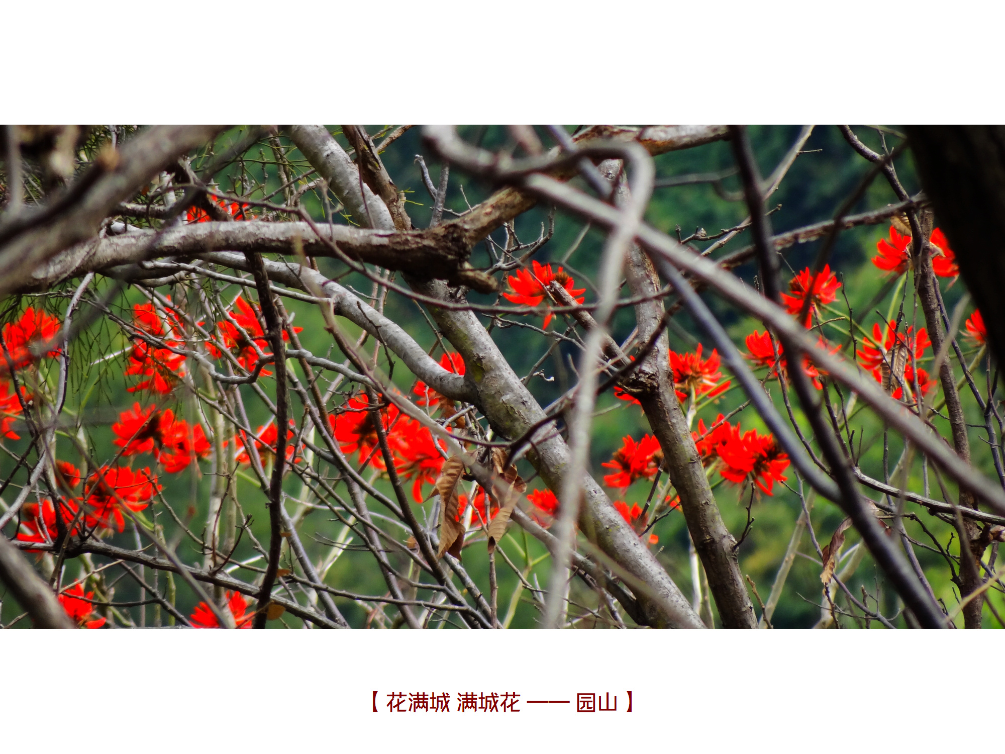 DSC04856 园山.jpg