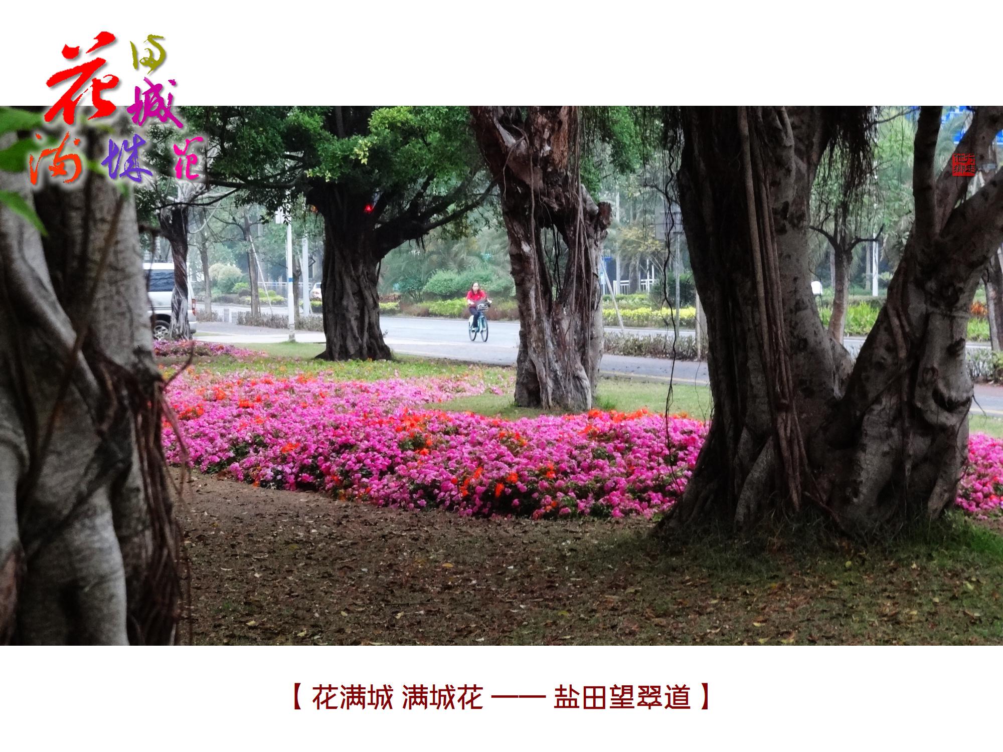 DSC06668 盐田.jpg