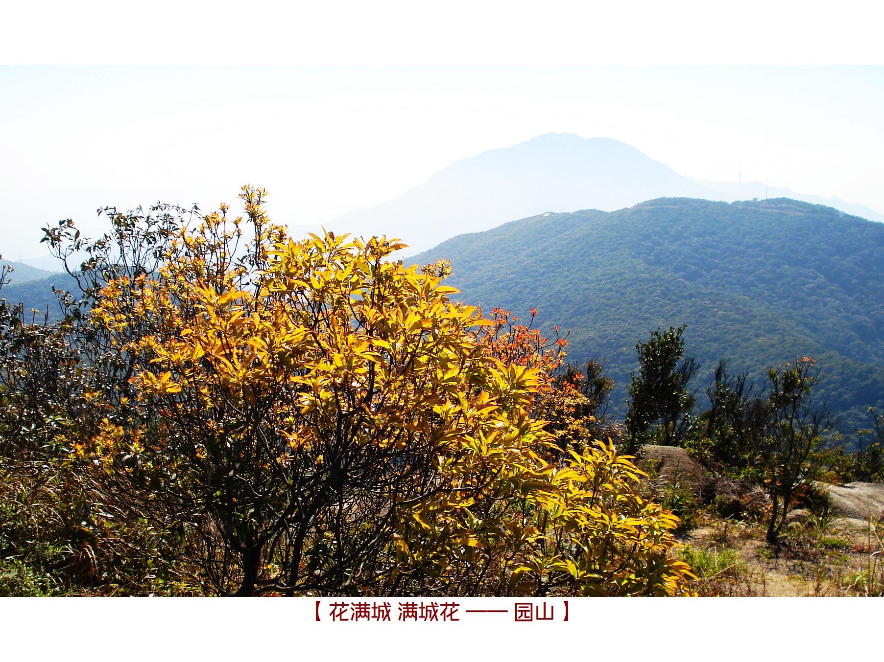 DSC08952 园山.jpg