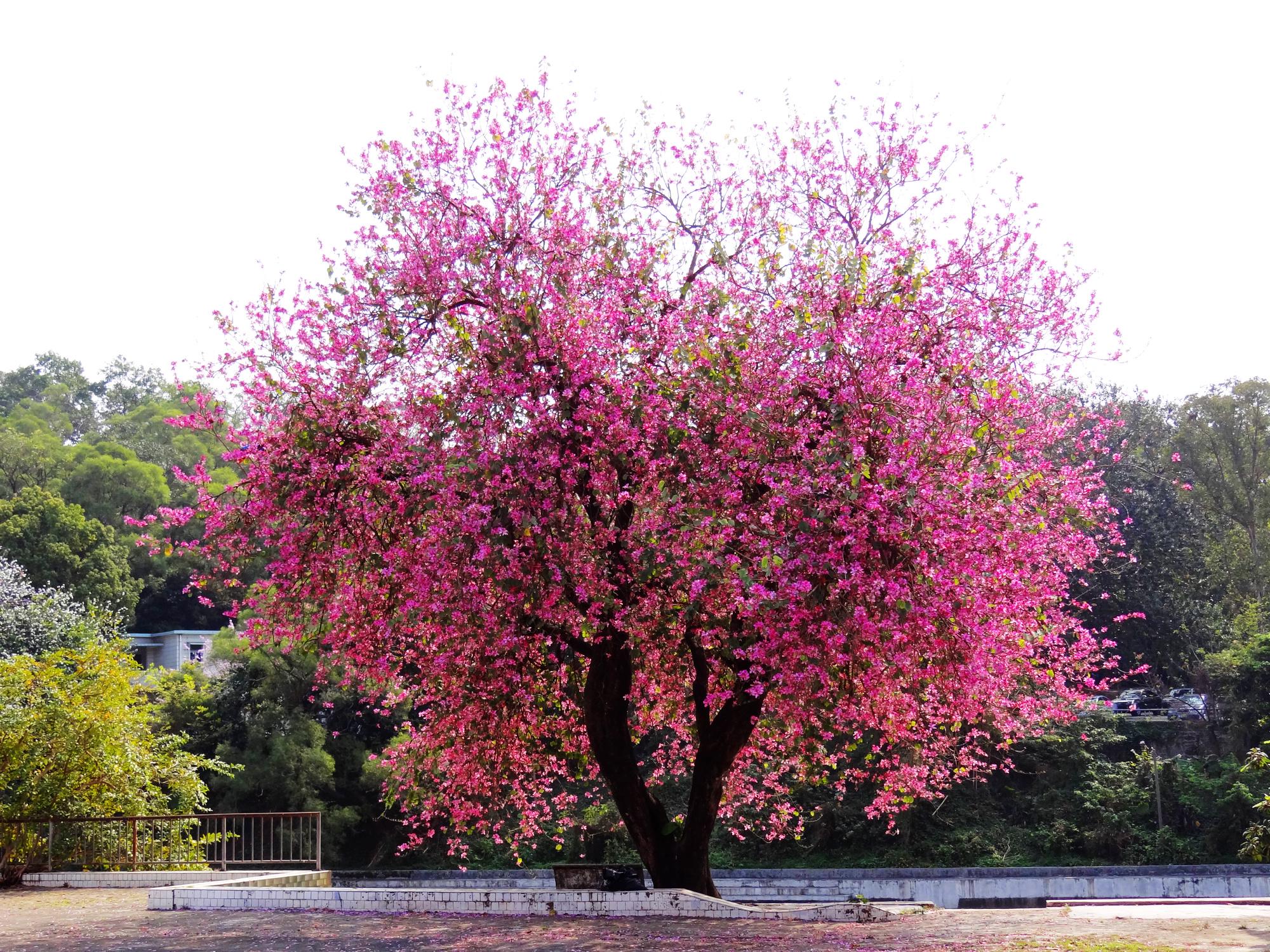 DSC09632 东湖公园.jpg