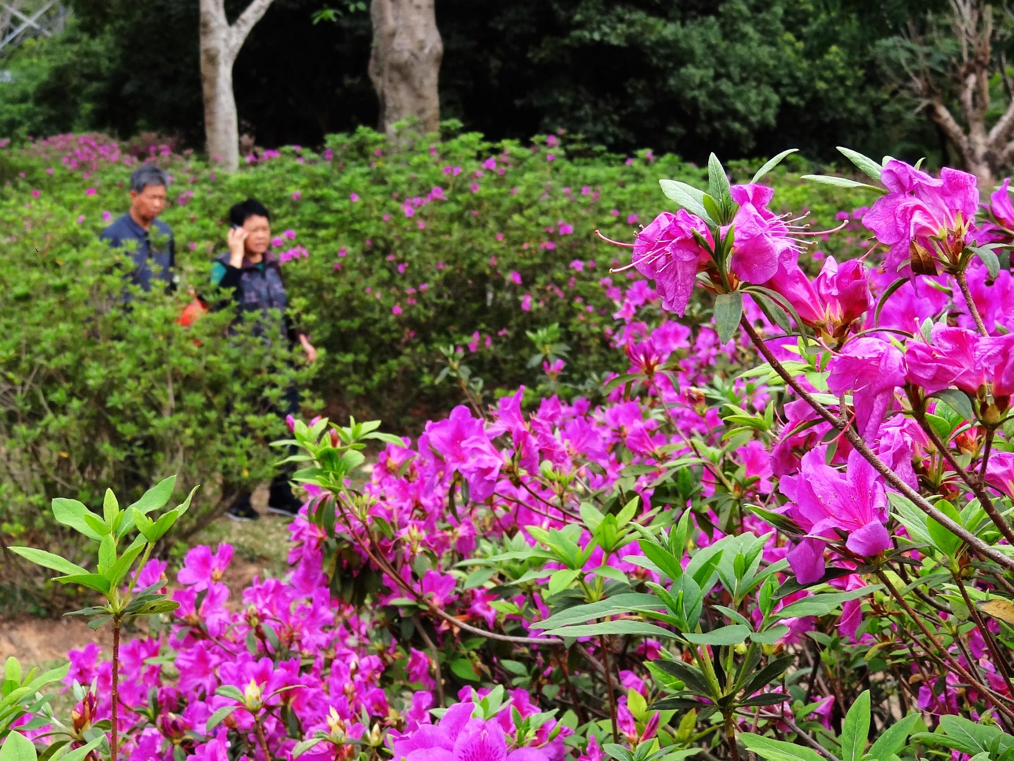 DSC09700 东湖公园.jpg