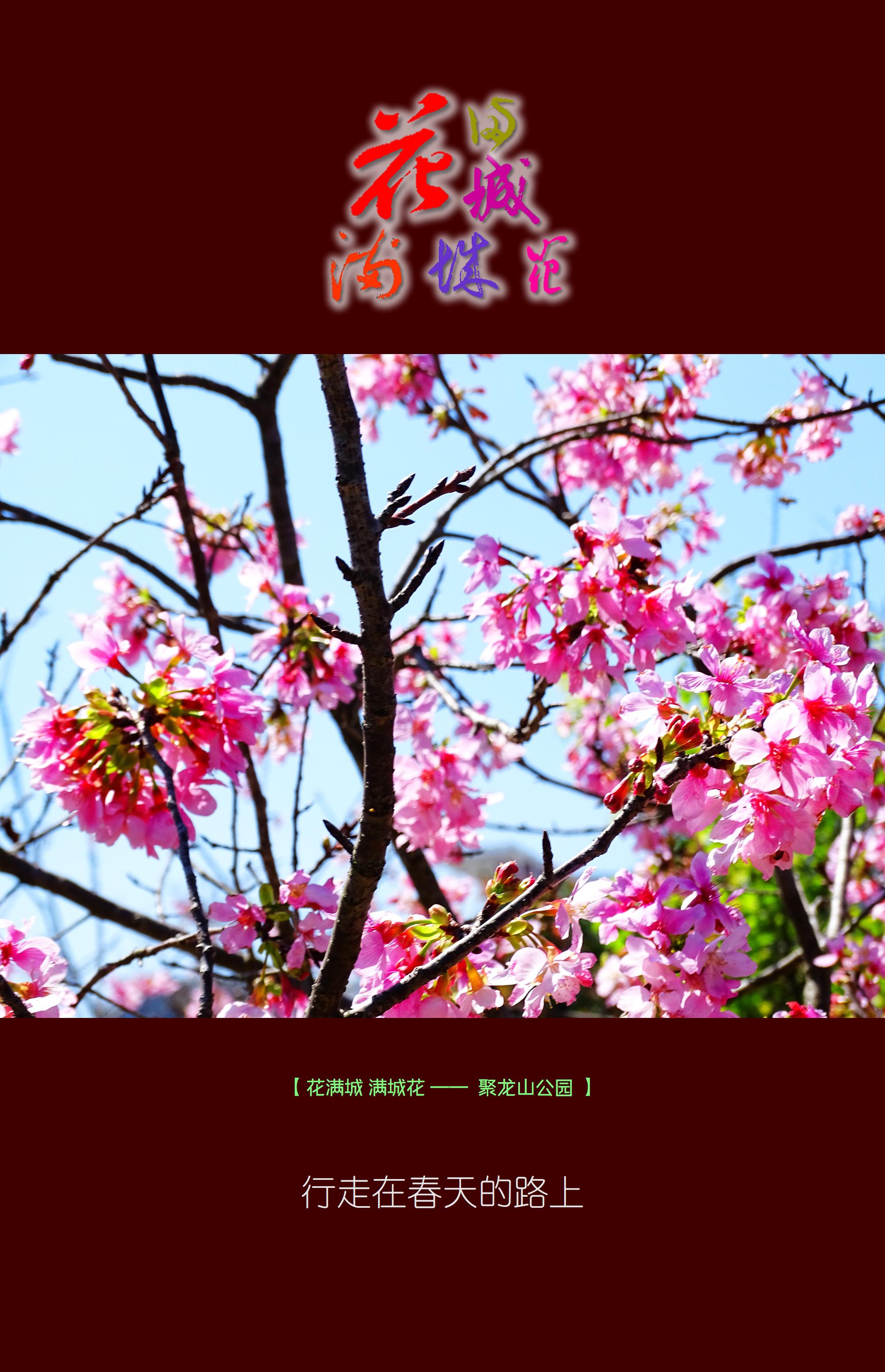 DSC02381 聚龙山.jpg