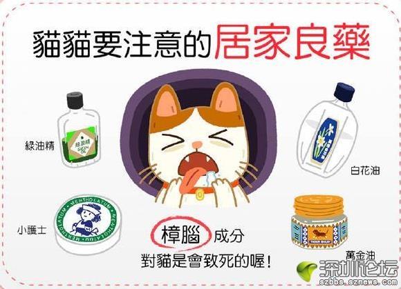 猫咪要注意的家庭常备药