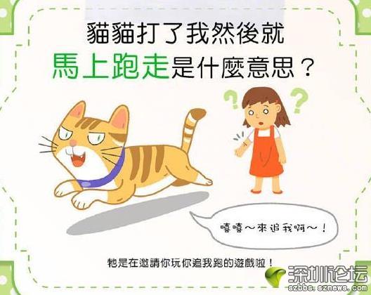 猫咪为何调戏你