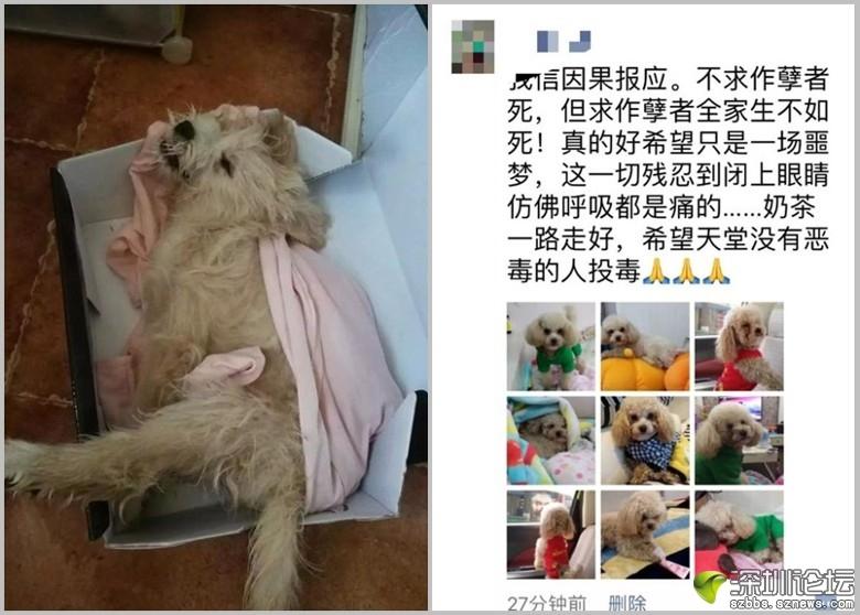 有寵物狗(左圖)因吃了有毒飯粒而死亡;狗主事後貼出詛咒毒投毒者的貼文(右圖)。 ...