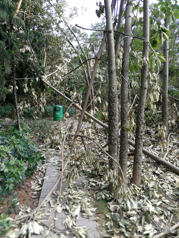 5IMG_20180923_084806深圳主要的道路通了,但一些公园次要的路还未通.jpg