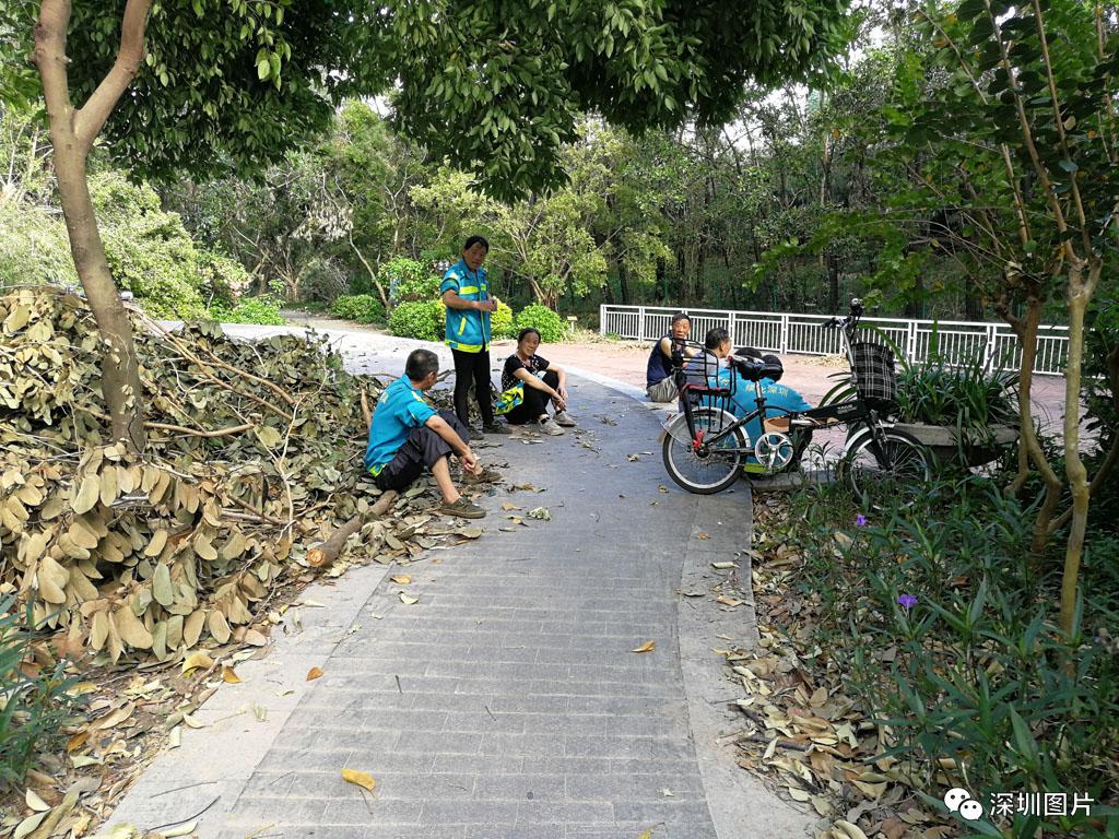 3IMG_20180923_085242深圳环卫工人说每天大约工作18小时,深圳的绿化多,这次受台风山.jpg