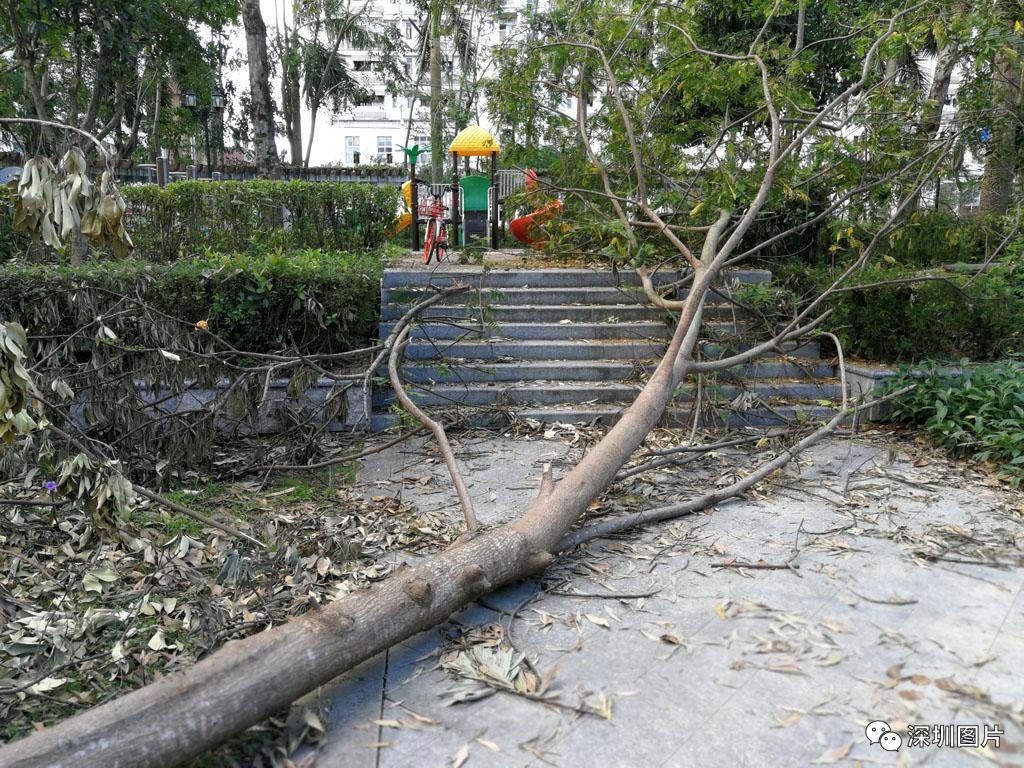 IMG_20180923_084016部分倒树还横在路上.jpg