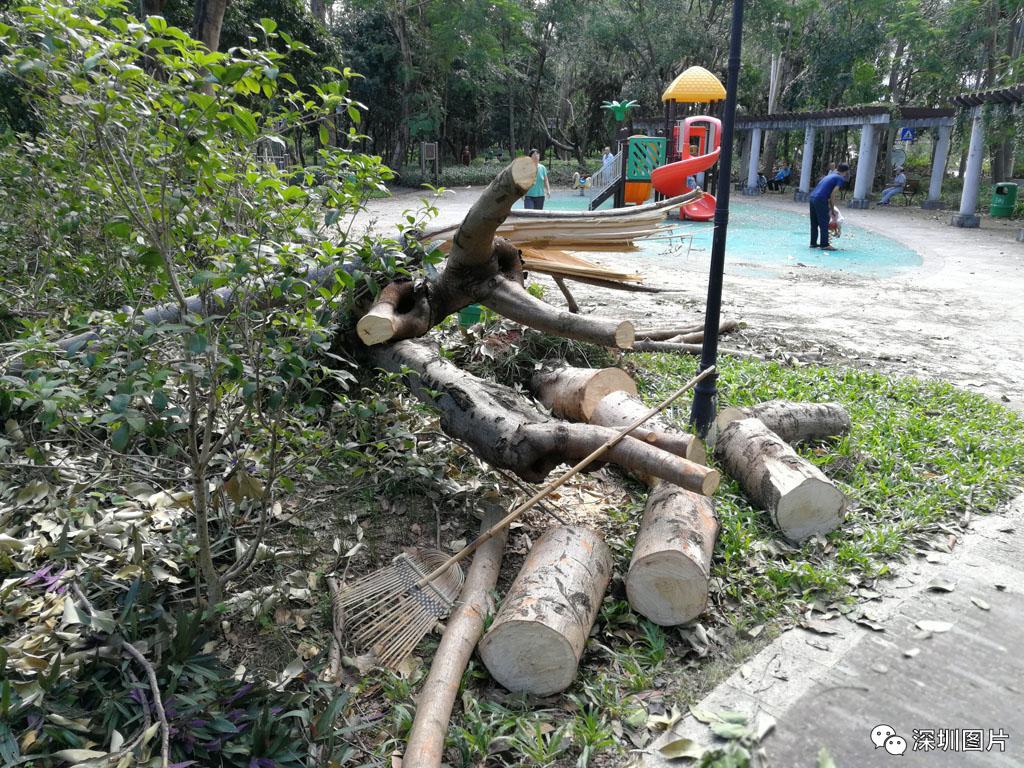 IMG_20180923_084546路旁有些断树未被运走.jpg