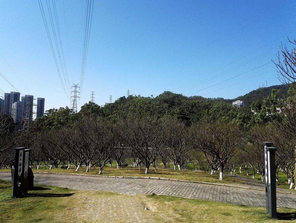 梅园景20181217_3.jpg