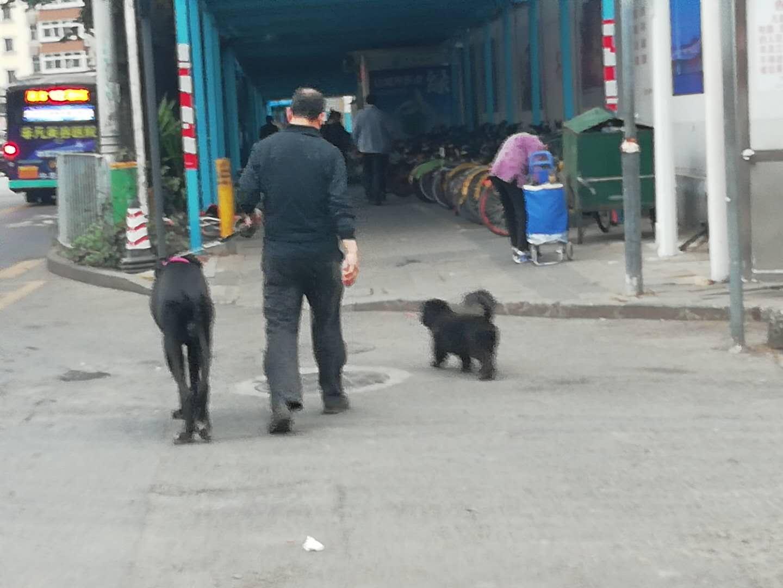 一条同行的小狗没有栓绳。