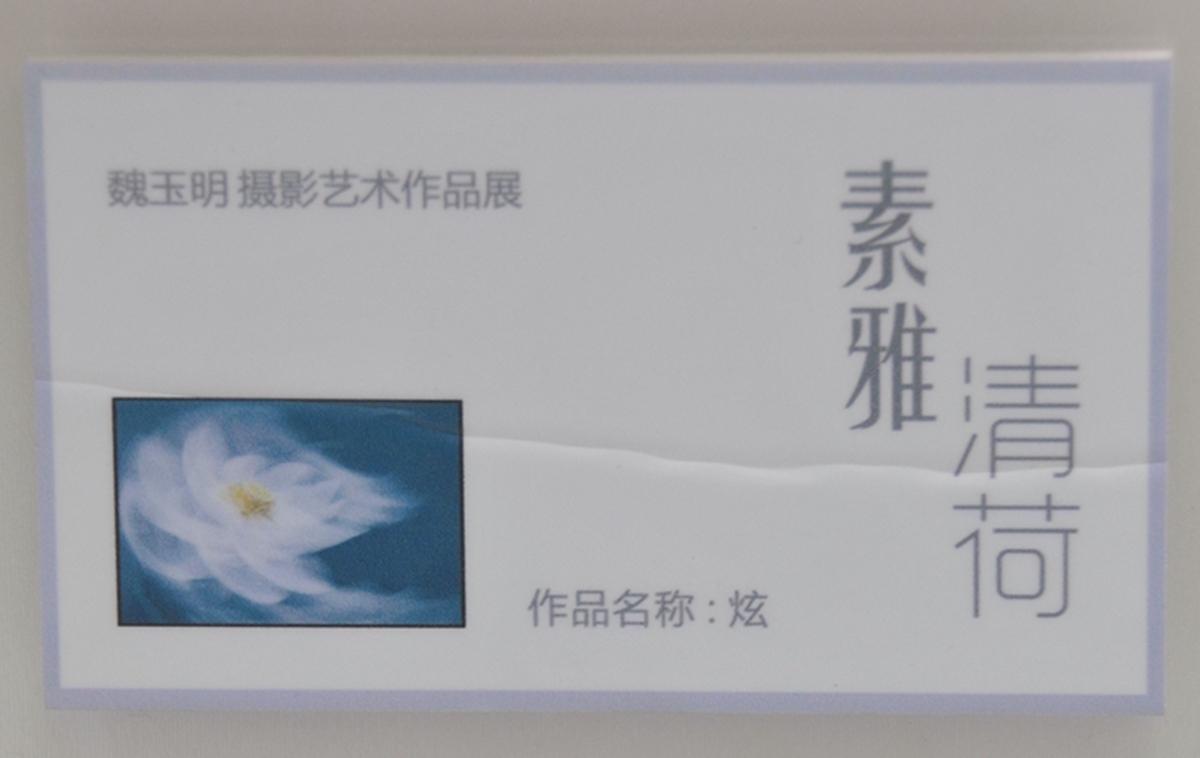素雅清荷_335.jpg