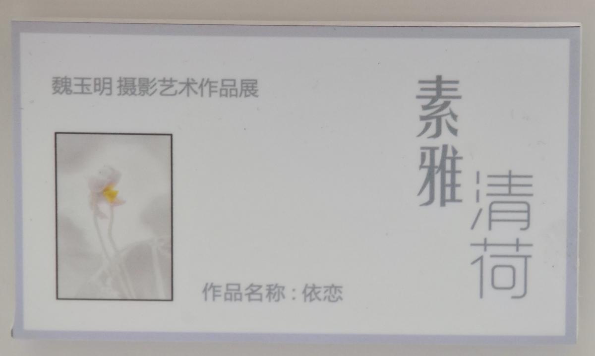 素雅清荷_337.jpg