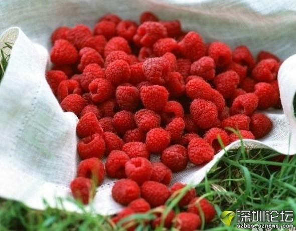 家乡薅秧莓.jpg