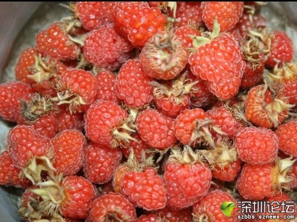 家乡牛角莓.jpg