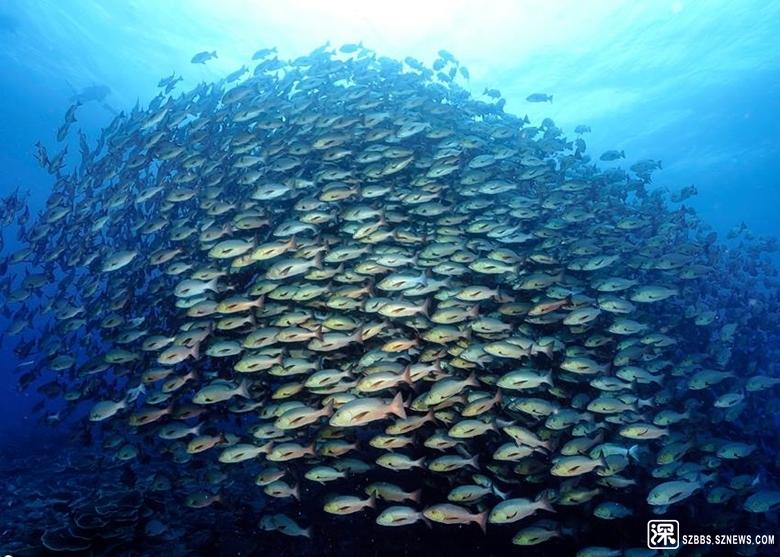 吳永森不時在Facebook上傳海底下的拍攝作品。