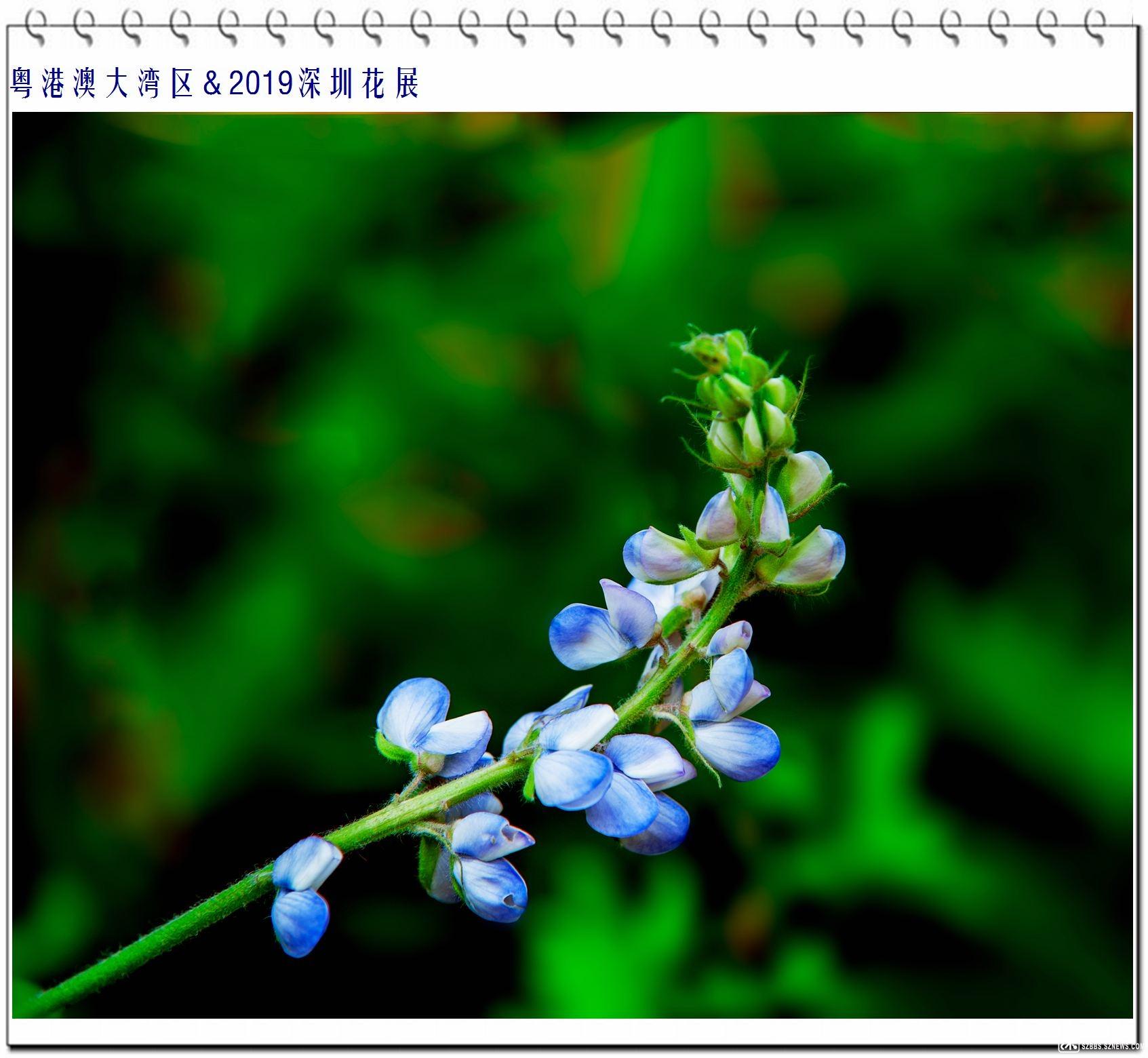 _DSC7500.jpg