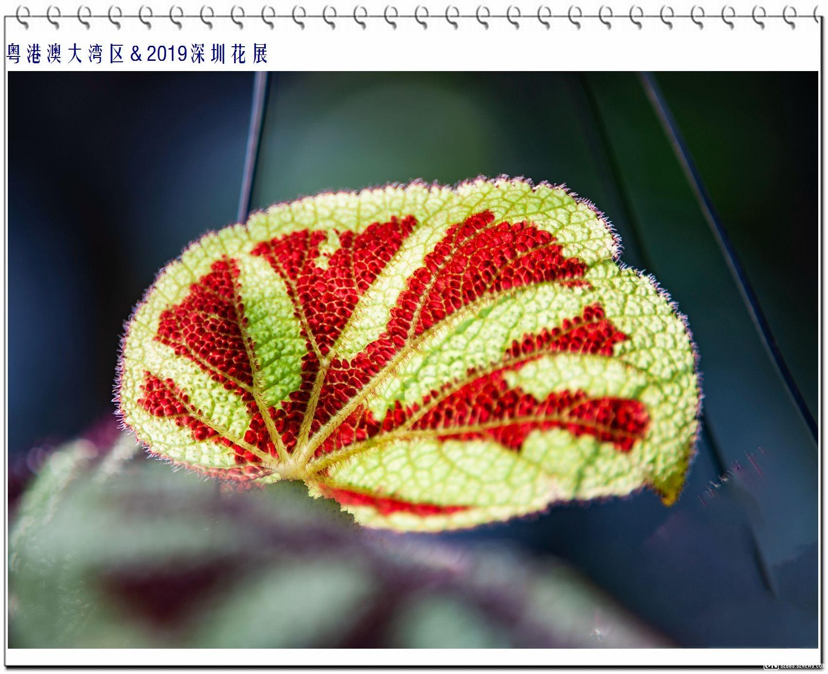 地毯花 (2).jpg