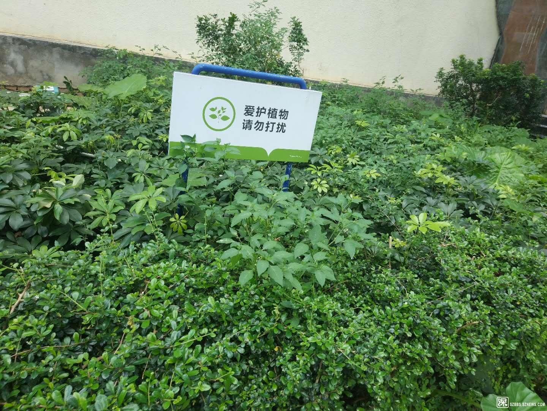 原来的绿化带