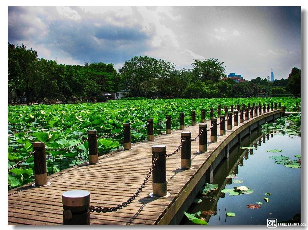 洪湖公园.jpg