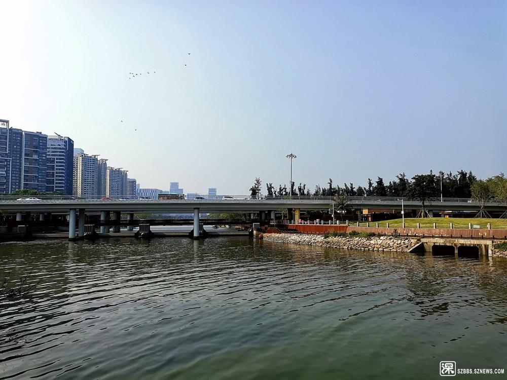 大沙河20190809_634.jpg