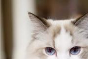 分享猫咪萌宠