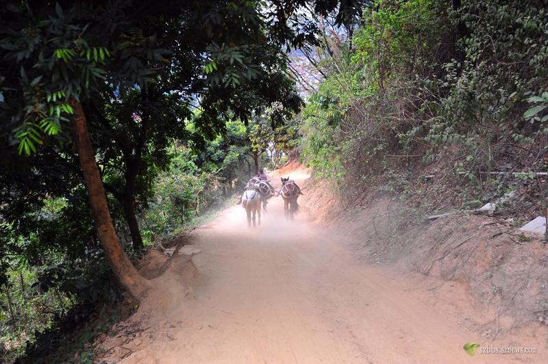 修登山道用的马匹