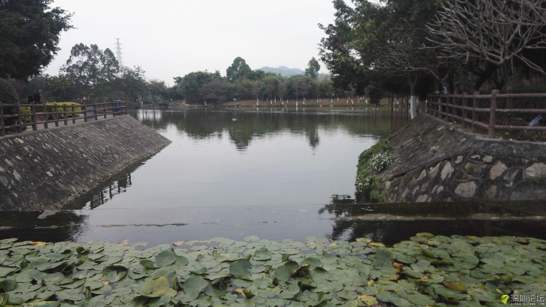 凤凰山 (2).jpg