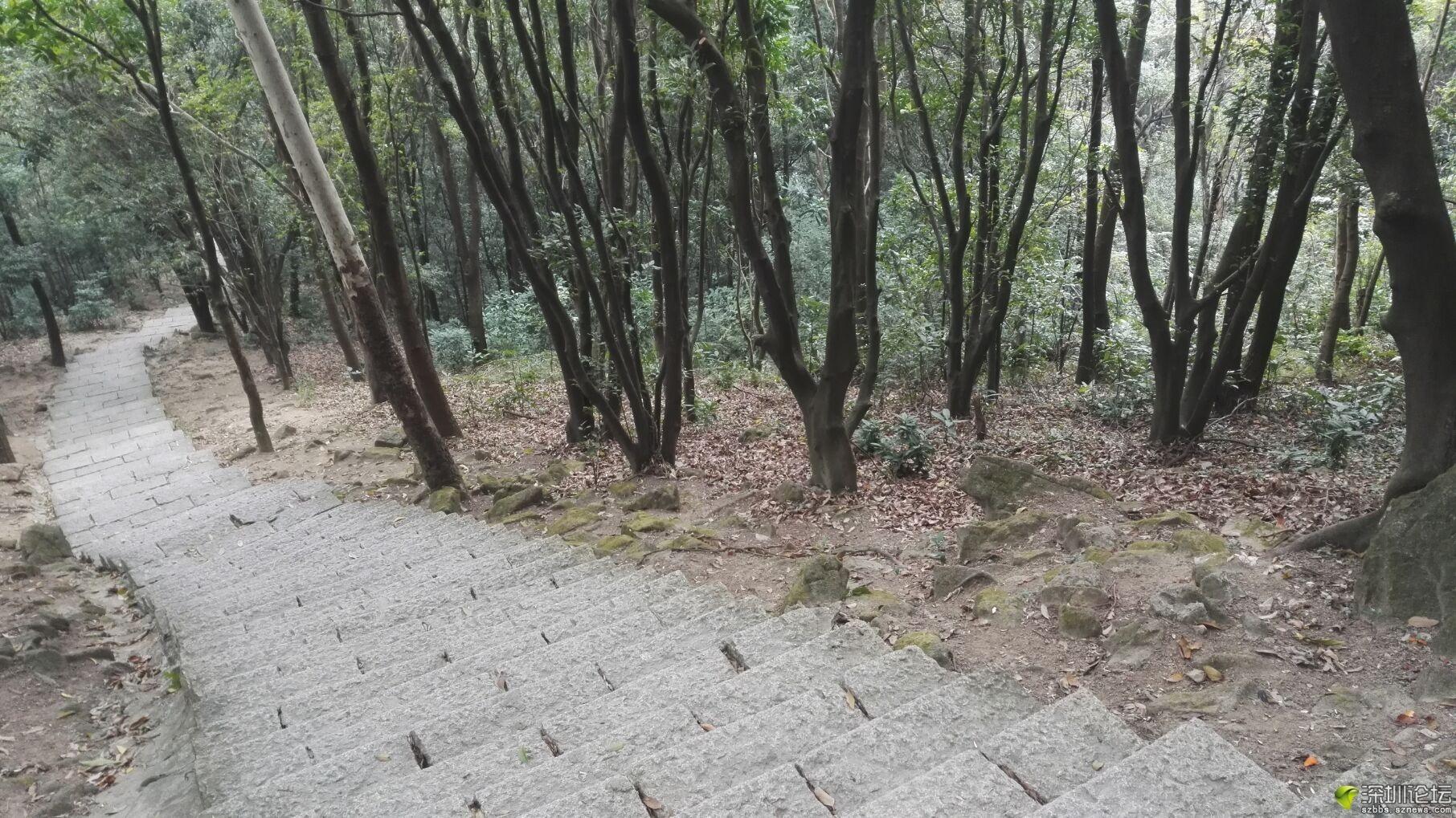 凤凰山 (9).jpg