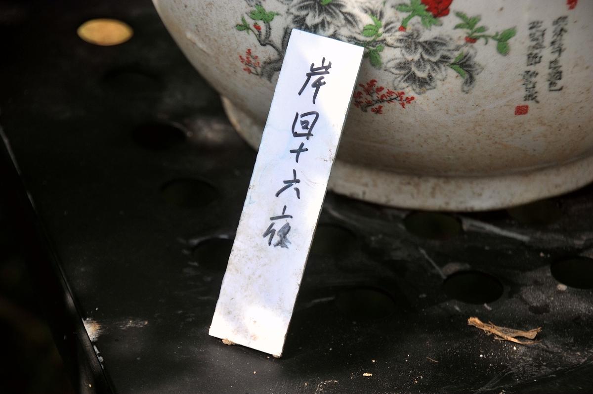 东湖菊花岸回十六夜_693.jpg