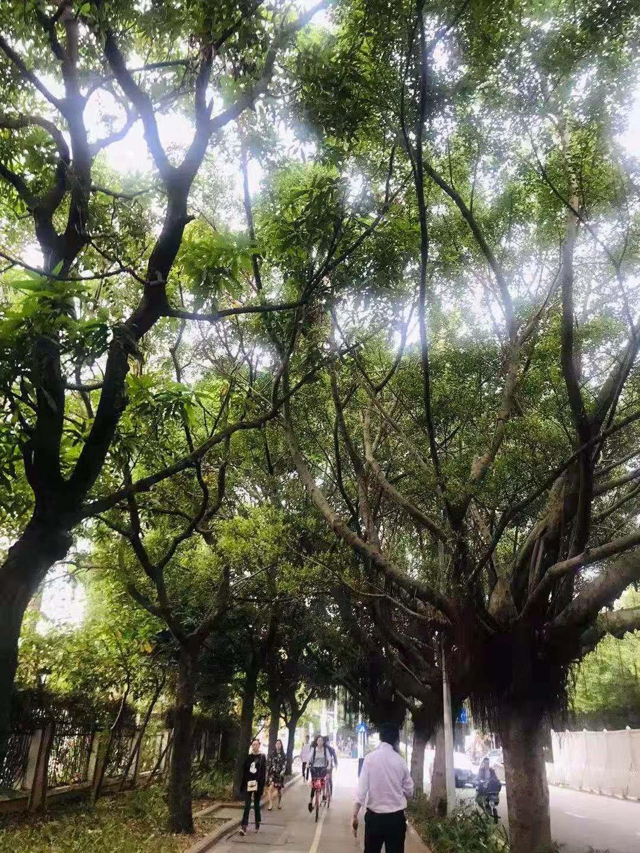 20181206214701大树.jpg