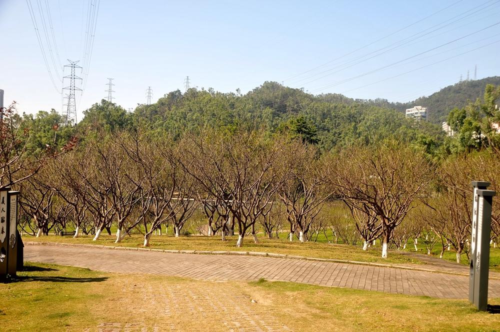 梅园景_236.jpg