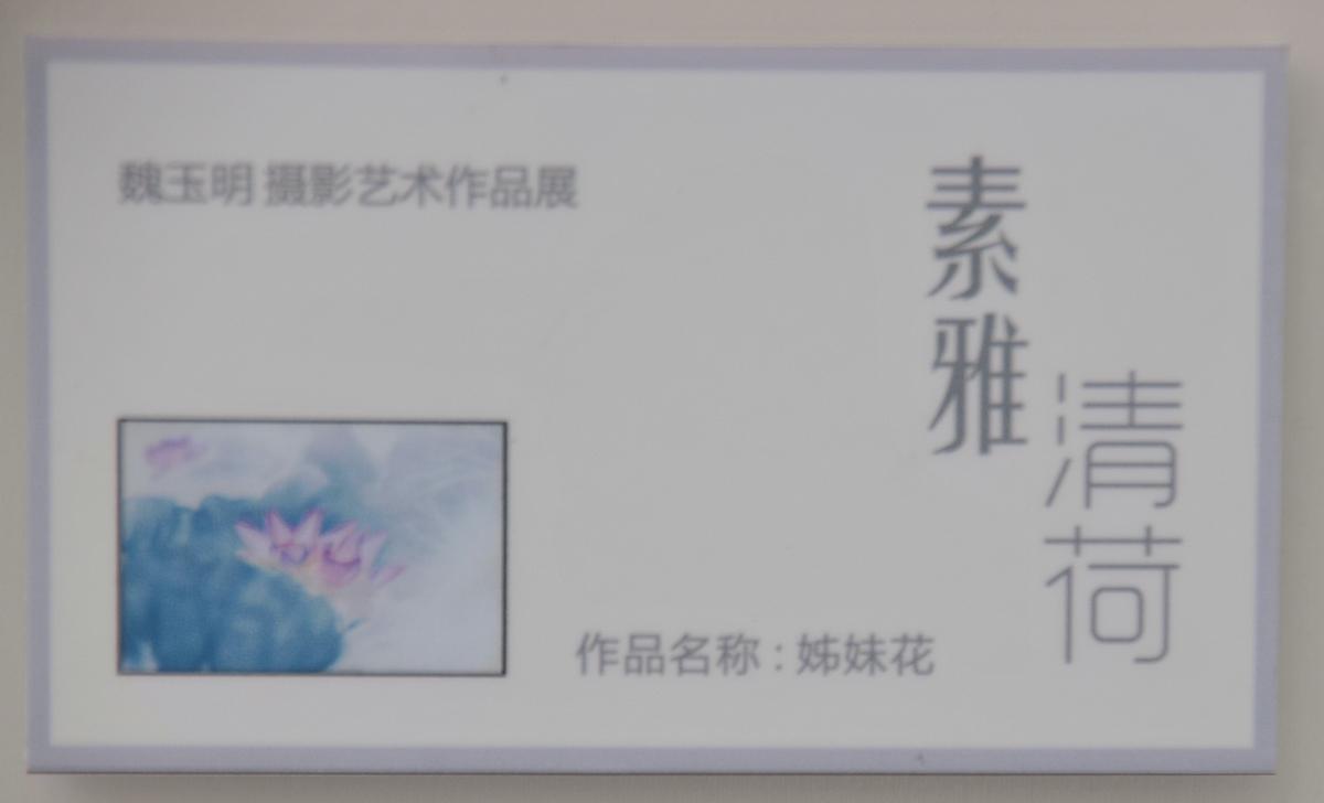 素雅清荷_344.jpg