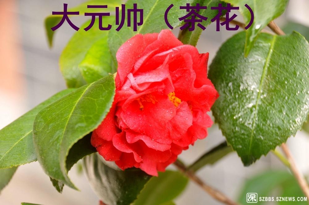 20大元帅_915.jpg