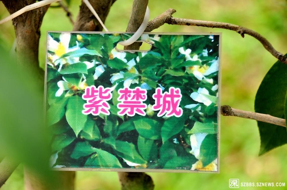 25紫禁城_911.jpg