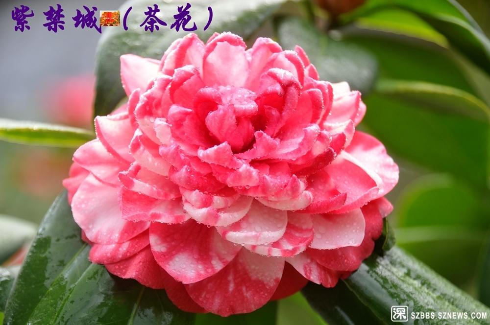 24紫禁城_919.jpg